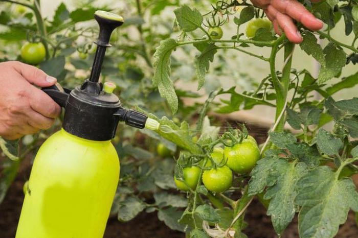 обработка помидор от фитофторы